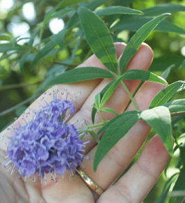 Vitex and Fertility | Vitex and Getting Pregnant
